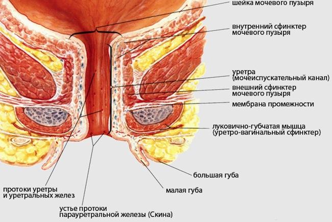 Сквиртинк железы скина